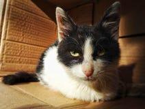 Οι άστεγοι απομακρύνονται γάτα Στοκ φωτογραφίες με δικαίωμα ελεύθερης χρήσης