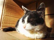 Οι άστεγοι απομακρύνονται γάτα 3 Στοκ φωτογραφίες με δικαίωμα ελεύθερης χρήσης