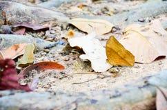 Οι έξοχες πεταλούδες με τη στιγμή της ειρήνης μαγική Στοκ Φωτογραφία