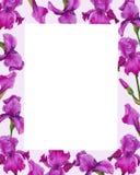 Οι ίριδες λουλουδιών watercolor πλαισίων αναπηδούν τη βοτανική πρόσκληση ευχετήριων καρτών σχεδίου απεικόνισης ελεύθερη απεικόνιση δικαιώματος