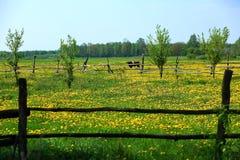 Οι αγελάδες είναι δημοφιλή ζώα αγροκτημάτων που βρίσκονται σε όλο τον κόσμο στοκ φωτογραφία με δικαίωμα ελεύθερης χρήσης