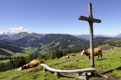 Οι αγελάδες βόσκουν σε έναν σταυρό συνόδου κορυφής Στοκ φωτογραφία με δικαίωμα ελεύθερης χρήσης
