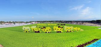 Οι αγρότες δημιουργούν γειά σου τις εικόνες γατακιών σε έναν τομέα ρυζιού Στοκ Εικόνα