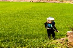 Οι αγρότες εγχέουν τα φυτοφάρμακα προστατεύουν τις εγκαταστάσεις στους τομείς ρυζιού στοκ εικόνες