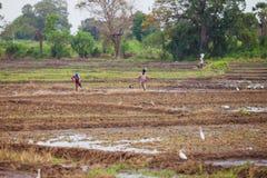 Οι αγρότες στους τομείς Ασιατικοί αγρότες Στοκ φωτογραφία με δικαίωμα ελεύθερης χρήσης