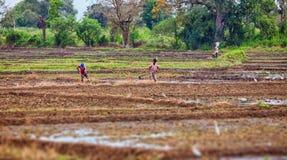 Οι αγρότες στους τομείς Ασιατικοί αγρότες Στοκ Εικόνα