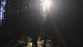 Οι ακτίνες ήλιων λάμπουν σε όλα τα δέντρα στο βαθύ δάσος απόθεμα βίντεο