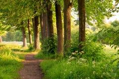 Οι ακτίνες ήλιων πρωινού φωτίζουν τη φύση Στοκ φωτογραφία με δικαίωμα ελεύθερης χρήσης