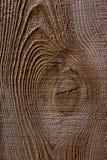 οι ακτίνες ανασκόπησης κλείνουν να καταρρίψουν το δέντρο επάνω Σύσταση δέντρων ρωγμών Υπόβαθρο σύστασης φύσης Στοκ εικόνα με δικαίωμα ελεύθερης χρήσης