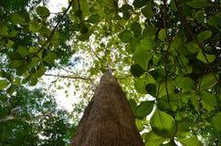 οι ακτίνες ανασκόπησης κλείνουν να καταρρίψουν το δέντρο επάνω Στοκ φωτογραφία με δικαίωμα ελεύθερης χρήσης