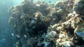 Οι ακτίνες του ήλιου φωτίζουν την κοραλλιογενή ύφαλο υποβρύχια, σε αργή κίνηση φιλμ μικρού μήκους
