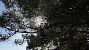 Οι ακτίνες του ήλιου μέσω του σκοτεινού δάσους απόθεμα βίντεο