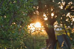 Οι ακτίνες του φωτός του ήλιου στο ηλιοβασίλεμα ή την ανατολή κάνουν τον τρόπο τους thr Στοκ φωτογραφίες με δικαίωμα ελεύθερης χρήσης