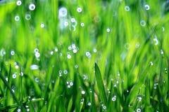 Οι ακτίνες του φύλλου έντονου φωτός ήλιων βλαστάνουν την άνοιξη κλάδων Στοκ φωτογραφία με δικαίωμα ελεύθερης χρήσης
