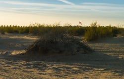 Οι αμμόλοφοι άμμου Στοκ Εικόνα