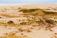 Οι αμμόλοφοι της θάλασσας της Βαλτικής Στοκ Φωτογραφίες