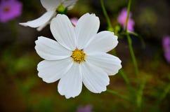οι ανθοδέσμες υποκύπτουν άνευ ραφής μικρό προτύπων λουλουδιών αριθμού Στοκ φωτογραφία με δικαίωμα ελεύθερης χρήσης