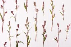 οι ανθοδέσμες υποκύπτουν άνευ ραφής μικρό προτύπων λουλουδιών αριθμού Επίπεδος βάλτε, τοπ άποψη απομονωμένο έννοια λευκό φύσης Στοκ φωτογραφίες με δικαίωμα ελεύθερης χρήσης