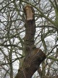 Οι αντίχειρες επάνω στο δέντρο Στοκ Εικόνες