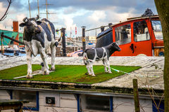 Οι αριθμοί της αγελάδας στη στέγη house-boat Στοκ Εικόνες