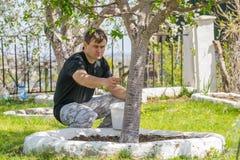 Οι αρσενικές διαδικασίες ασπρίζουν τους κορμούς των οπωρωφόρων δέντρων στο θερινό εξοχικό σπίτι Στοκ εικόνες με δικαίωμα ελεύθερης χρήσης