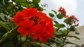 Οι αρχές του καλοκαιριού φέρνουν την ομορφιά στα λουλούδια στοκ φωτογραφία με δικαίωμα ελεύθερης χρήσης