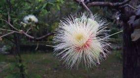 Οι αρχές του καλοκαιριού φέρνουν την ομορφιά στα λουλούδια στοκ εικόνες με δικαίωμα ελεύθερης χρήσης