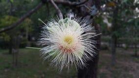Οι αρχές του καλοκαιριού φέρνουν την ομορφιά στα λουλούδια στοκ εικόνες