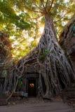 Οι αρχαίες καταστροφές και οι ρίζες δέντρων, ενός ιστορικού Khmer ναού μέσα Στοκ Εικόνες