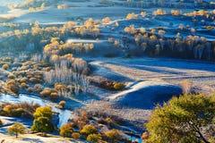 Οι ασημένιες σημύδες φθινοπώρου στην όχθη ποταμού Στοκ Εικόνες
