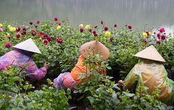 Οι ασιατικοί κηπουροί με το παραδοσιακό κωνικό καπέλο που φροντίζουν μια βοτανική καλλιεργούν Στοκ Φωτογραφία