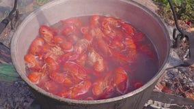 Οι αστακοί βράζονται στον πάσσαλο στην πυρκαγιά Μεσημεριανό γεύμα υπαίθρια απόθεμα βίντεο
