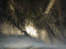 Οι αφηρημένοι κλάδοι σύνθεσης των ερυθρελατών και του φεγγαριού βλέπουν τη νύχτα από το παράθυρο του παγωμένου πάγου το χειμώνα Στοκ Φωτογραφίες