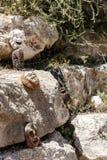 Οι αφρικανικές χειροποίητες μάσκες βρίσκονται μεγάλες πέτρες Στοκ Φωτογραφίες