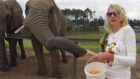 Οι αφρικανικοί ελέφαντες αντιμετωπίζουν απόθεμα βίντεο