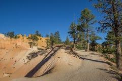 Οι βασίλισσες καλλιεργούν ίχνος στο εθνικό πάρκο φαραγγιών του Bryce στοκ εικόνα