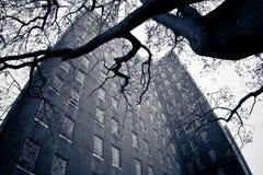 Οι βασιλιάδες σταθμεύουν την ψυχιατρική Νέα Υόρκη στοκ εικόνες
