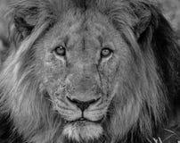 Οι βασιλιάδες σημειώνουν στοκ εικόνες με δικαίωμα ελεύθερης χρήσης