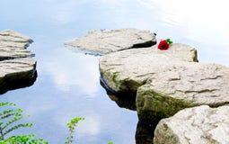 οι βράχοι αυξήθηκαν ενιαίος Στοκ φωτογραφίες με δικαίωμα ελεύθερης χρήσης