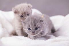 Οι γάτες θέτουν για τις φωτογραφίες Στοκ Φωτογραφία