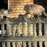 Οι γάτες κάθονται επάνω σε έναν φράκτη Στοκ φωτογραφίες με δικαίωμα ελεύθερης χρήσης