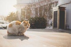 Οι γάτες κάθονται στη θερμή ηλιοφάνεια το χειμώνα Στοκ Εικόνα