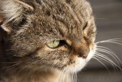 οι γάτες κλείνουν το μάτι επάνω Στοκ Εικόνες