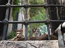 οι γάτες προσανατολίζο&u Στοκ εικόνες με δικαίωμα ελεύθερης χρήσης