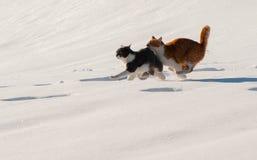 Οι γάτες ρυμούλκησης τρέχουν το χιόνι γρήγορα Στοκ φωτογραφία με δικαίωμα ελεύθερης χρήσης