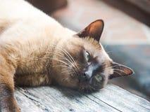 Οι γάτες στοκ εικόνες