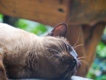 Οι γάτες στοκ εικόνες με δικαίωμα ελεύθερης χρήσης