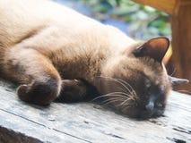 Οι γάτες στοκ φωτογραφία με δικαίωμα ελεύθερης χρήσης