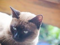 Οι γάτες στοκ φωτογραφίες