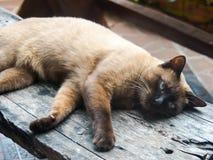 Οι γάτες στοκ φωτογραφίες με δικαίωμα ελεύθερης χρήσης